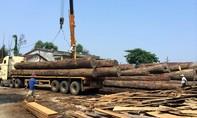 Một tài xế bị gỗ đè trúng tử vong
