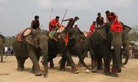 Hấp dẫn đua voi và voi đá bóng ở Buôn Đôn