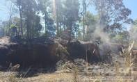Huy động hàng trăm người để chữa cháy rừng