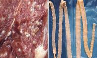 Bệnh sán dây, ấu trùng sán lợn và các biện pháp phòng bệnh