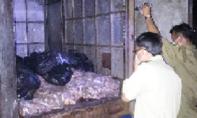 Phát hiện xe tải chở hơn 700 kg thịt gà bốc mùi
