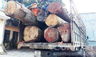 """Bắt xe chở gỗ lậu tại con đường từ nghĩa địa lên """"cổng trời"""""""