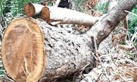 Kiểm lâm vùng IV kiểm tra vụ phá rừng Báo Công an TP.HCM phản ánh