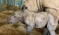 Phả hệ gia đình 2 chú tê giác mới ra đời tại Vinpearl Safari Phú Quốc