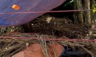 Một người đàn ông bị sát hại, giấu xác dưới đống cây ngô