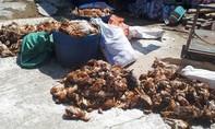 Nhóm người tấn công trang trại, sát hại 1.200 con gà trong đêm