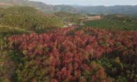 Thủ tướng chỉ đạo làm rõ vụ 10 héc ta rừng thông bị đầu độc