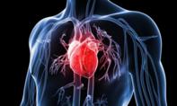 30 phút đi bộ mỗi ngày có thể giúp phòng ngừa bệnh tim mạch