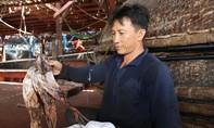 """Ngư dân Quảng Nam """"khóc ròng"""" vì gần 1.000 tấn mực khô ứ đọng"""