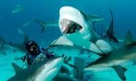 Nữ du khách Mỹ bị 3 con cá mập cắn chết