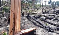 Được giao quản lý hơn 13.000 ha rừng, để mất 9.000 ha