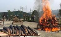 Áp lực kinh tế trong việc lưu giữ hơn 50 tấn ngà voi tang vật