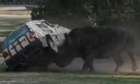 Clip tê giác tức giận hất tung xe hơi tại công viên