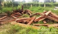 """Gặp đoàn kiểm tra, """"lâm tặc"""" bỏ lại lượng lớn gỗ chạy thoát thân"""