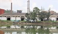 Quảng Nam: Tạm dừng hoạt động nhà máy cồn sau sự cố rò rỉ dầu