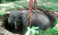 Clip giải cứu voi khổng lồ rơi xuống giếng sâu 6 mét