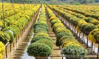 Sau phản ánh của Báo Công an TPHCM, làng hoa ngưng thu phí
