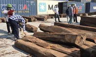 """TPHCM: Phát hiện 50 container gỗ quý """"đội lốt' gỗ thường nhập khẩu"""