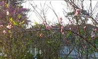 Xuân về trên thành phố ngàn hoa
