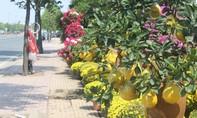 Trăm hoa khoe sắc trên tuyến đường đẹp nhất TP.HCM