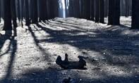 Hình ảnh động vật quằn quại trong lửa cháy rừng ở Úc