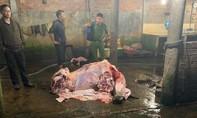 Liên tiếp phát hiện các cơ sở bơm nước vào bò trước khi giết mổ