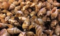 1 người chết, 7 người cấp cứu vì ngộ độc ốc biển