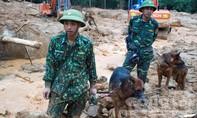 Đội chó nghiệp vụ khẩn cấp tìm kiếm 16 nạn nhân ở Rào Trăng