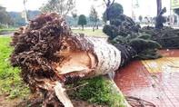Hình ảnh Bình Định ngổn ngang, thiệt hại nặng khi bão số 9 quét qua