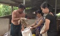 Hàng trăm con vịt của dân chết bất thường, nghi bị đầu độc