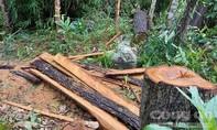 Gia Lai: Có 2 chốt bảo vệ, rừng vẫn bị phá