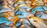 Trung Quốc ngừng nhập cá từ Indonesia vì phát hiện nhiễm nCoV