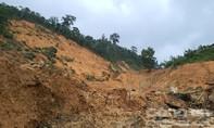 Ai đốn hạ 11 cây gỗ cổ thụ trong rừng phòng hộ Phước Sơn?