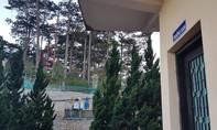 800m2 rừng thông gần phòng làm việc của Trưởng BQL rừng bị lấn chiếm