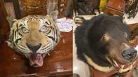 TPHCM: Bắt đối tượng mua con hổ Đông Dương về ngâm rượu