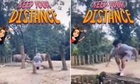 Cảnh sát truy tìm thanh niên 'nghịch dại' nhảy vào chuồng tê giác