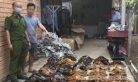 Phát hiện kho tiêu bản rùa biển quý hiếm tàng trữ trái phép