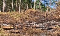 Rừng phòng hộ dọc quốc lộ 27C nối Đà Lạt - Nha Trang bị tàn phá