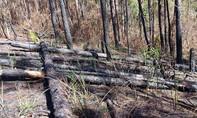 Vụ tàn phá rừng phòng hộ Phi Liêng: Công an vào cuộc điều tra