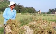 Đề nghị Bộ Công an truy tìm Facebooker đưa tin sai lệch về tỏi Lý Sơn