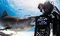 """Clip người đàn ông """"thôi miên"""" cá mập khổng lồ"""