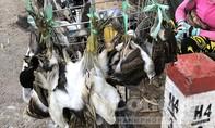 Thủ tướng yêu cầu soạn thảo chỉ thị về động vật hoang dã