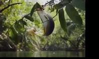 Clip cận cảnh cá bật khỏi mặt nước đớp trái cây