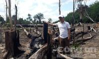 Khởi tố 3 vụ phá rừng ở vùng biên giới