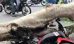 Khoảnh khắc cây bật gốc đổ trúng người đi đường