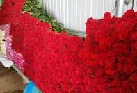 Đà Lạt: Người dân ở nhà... ngắm hoa mà rầu