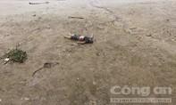 Phát hiện thi thể thanh niên tại khu vực Tân Cảng Phú Hữu