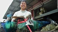 Trung Quốc dự thảo động vật được nuôi lấy thịt sau dịch: Không có chó, cầy hương