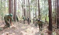 Kiểm điểm chủ rừng để cháy 17 héc-ta rừng nhưng không báo