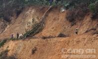 Phạt doanh nghiệp phá rừng khi thi công nhà máy điện gió